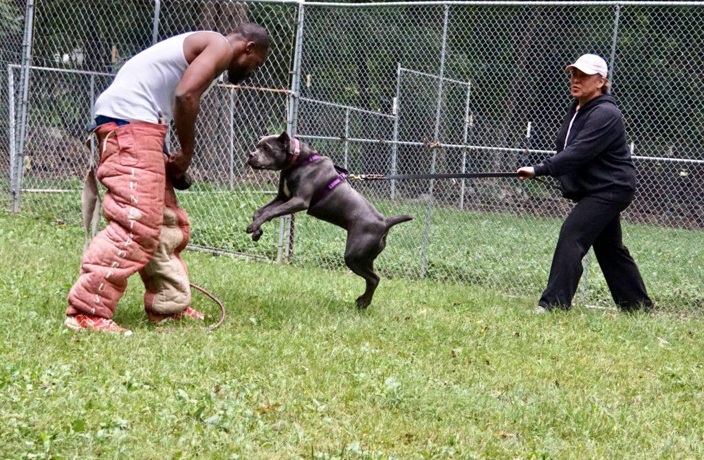 Hudson Valley Working Dog Club - DailyDogDevotional's